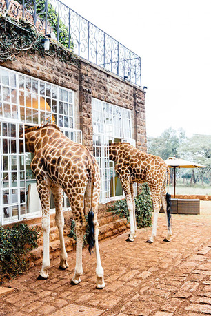 Giraffe Manor image